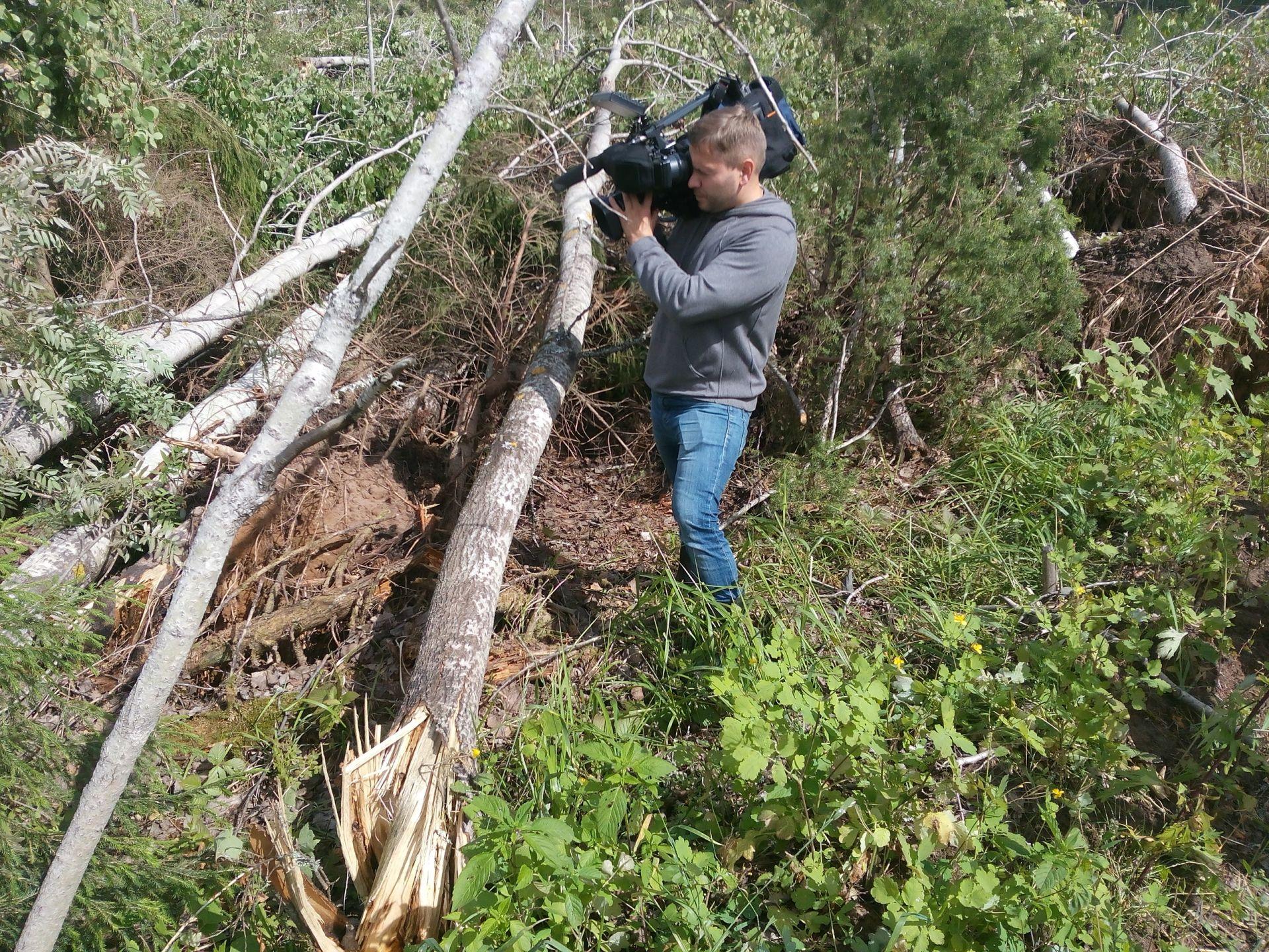 Природная стихия обрушилась на вятские леса.