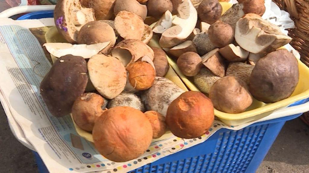 Собирать только знакомые, обрабатывать в тот же день: меры безопасности при употреблении грибов