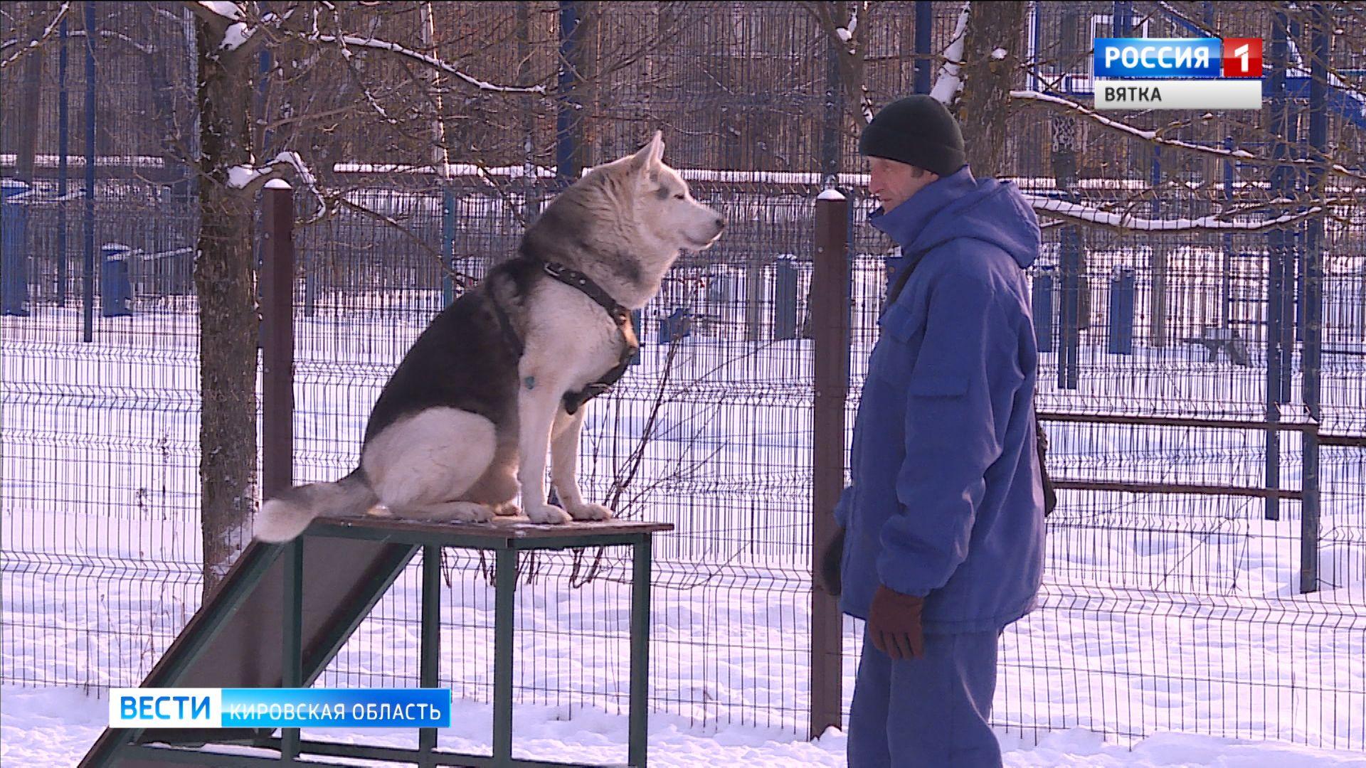 В кировских парках создадут специальные площадки для выгула и дрессировки собак