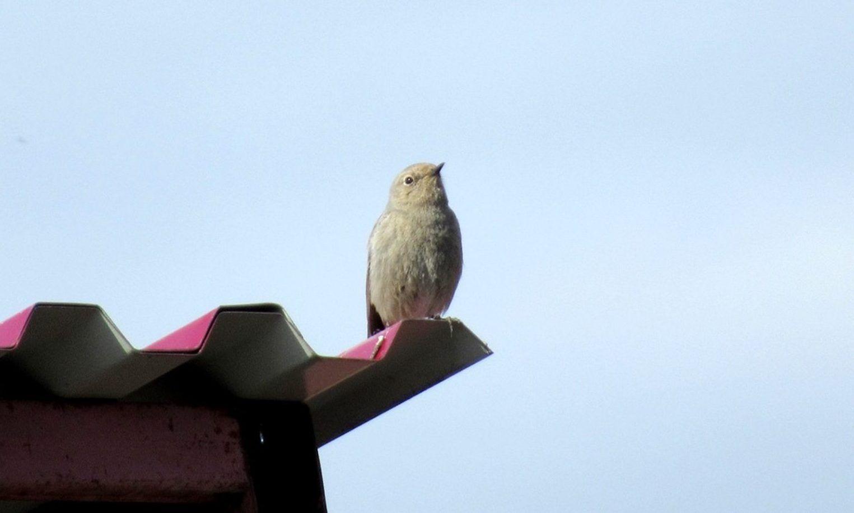 В заповеднике «Нургуш» заметили птицу из Красной книги
