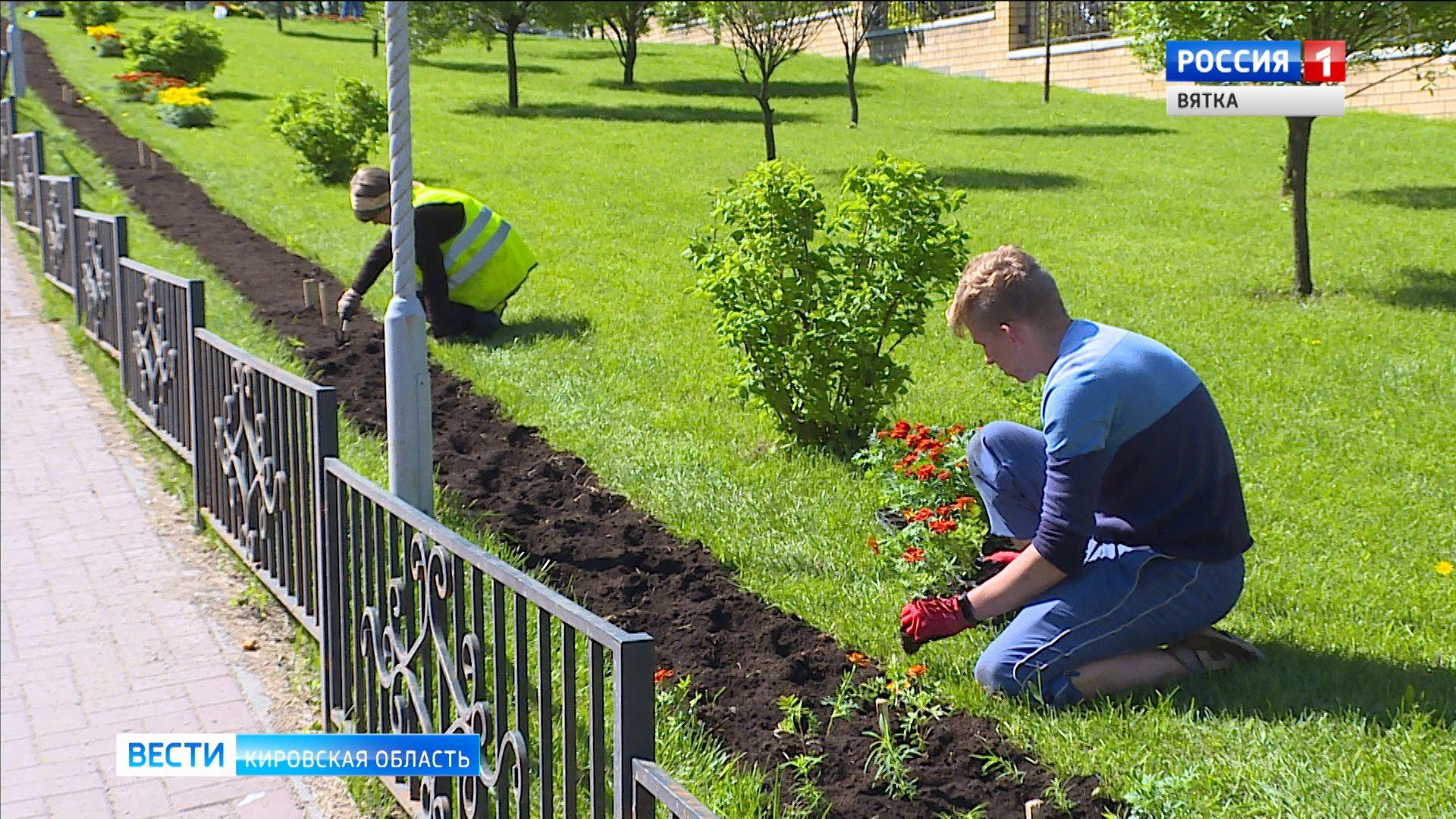 Более 150 тысяч цветов появятся на клумбах города Кирова