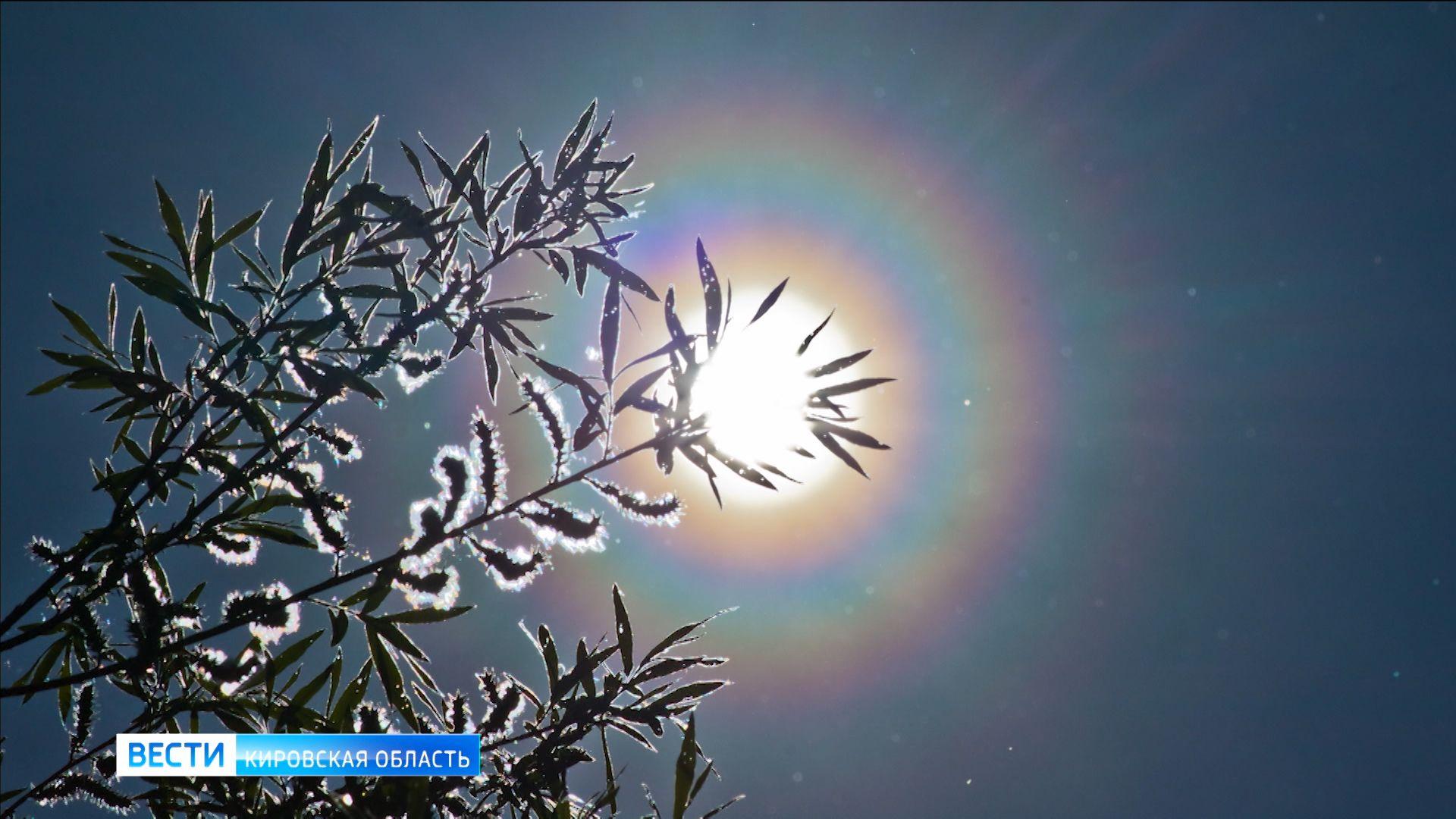 В Кировской области сфотографировали пыльцевую корону