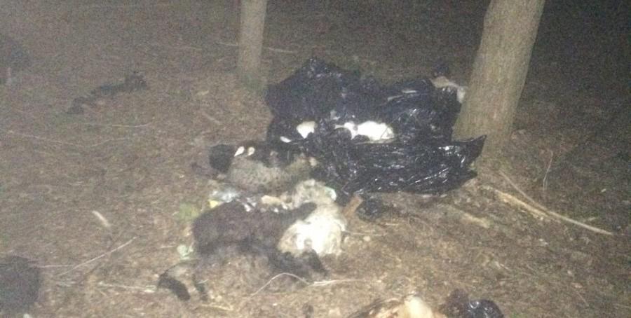 В Кирово-Чепецком районе нашли свалку останков кошек и собак.