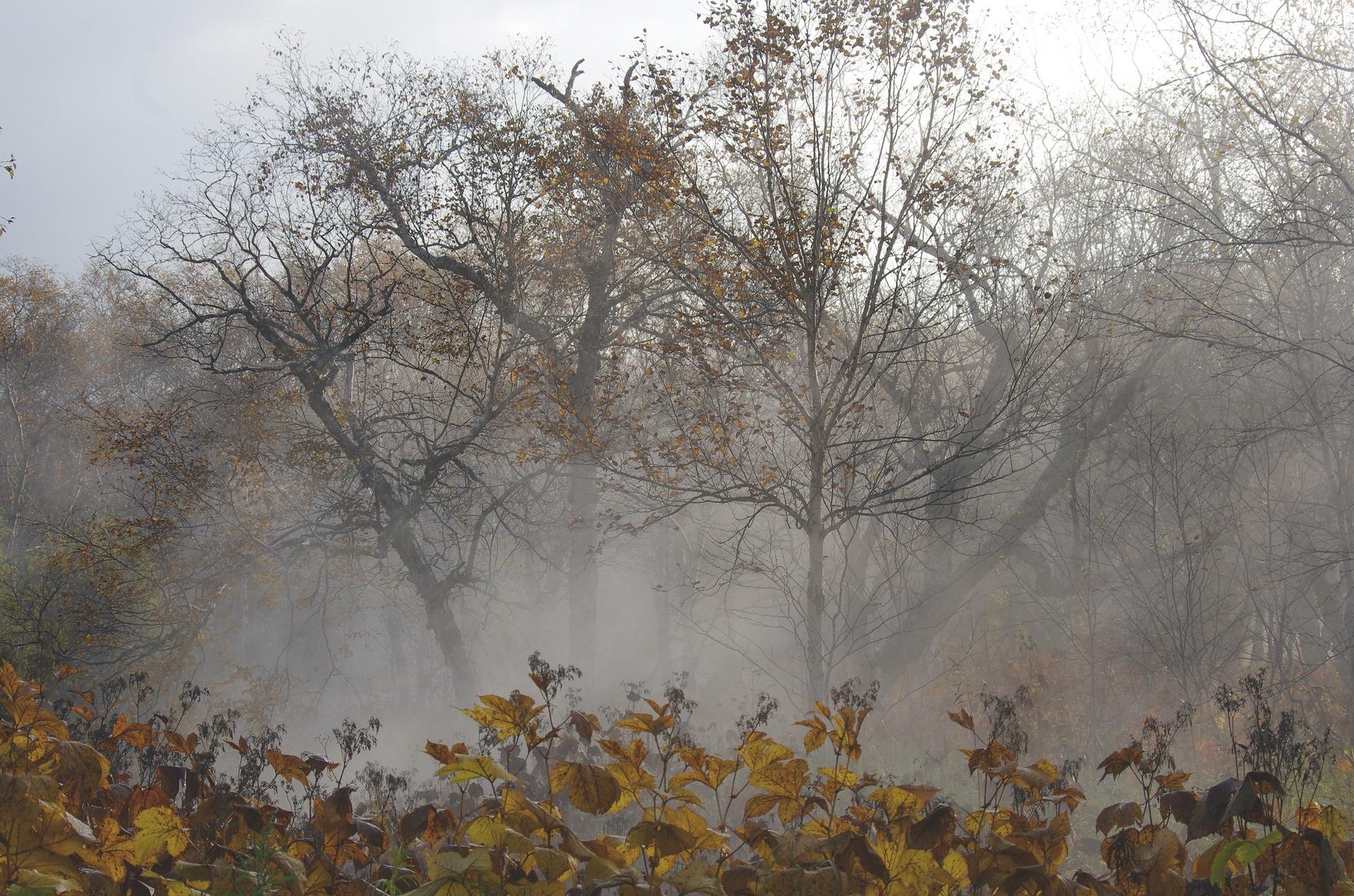 В Кировской области ожидаются дожди и похолодание до  1