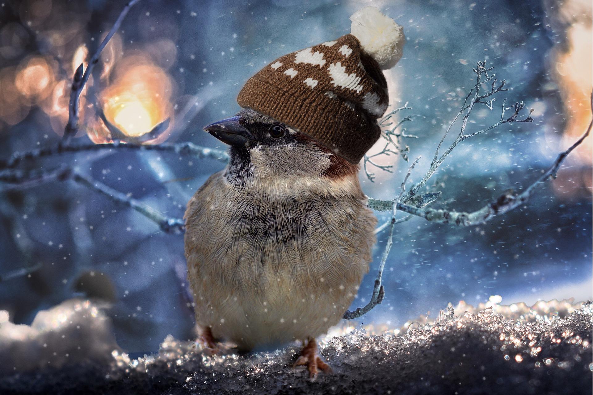 В Кировской области ожидаются дожди с мокрым снегом