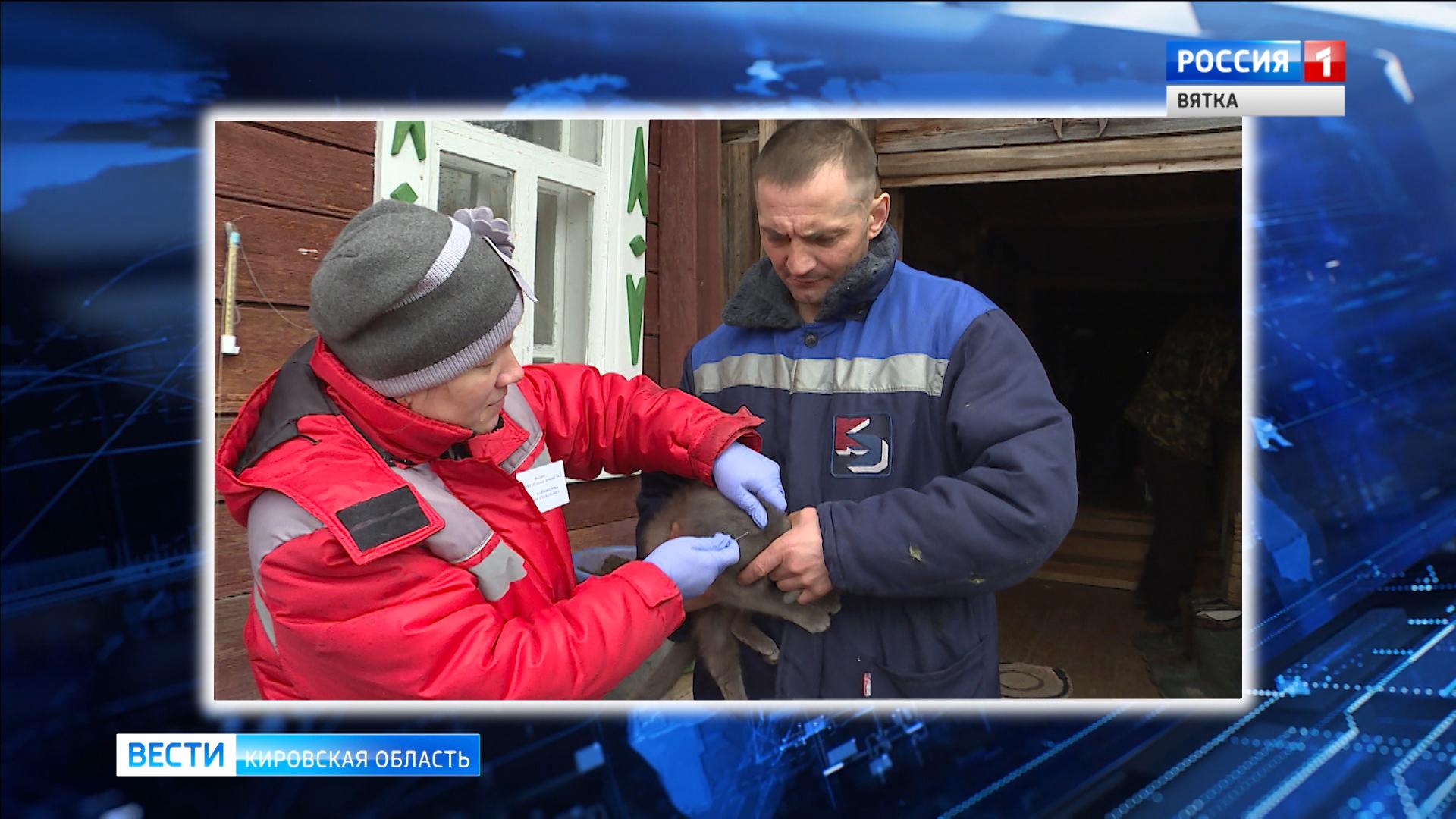 В Кирово-Чепецком районе зарегистрировали случай бешенства