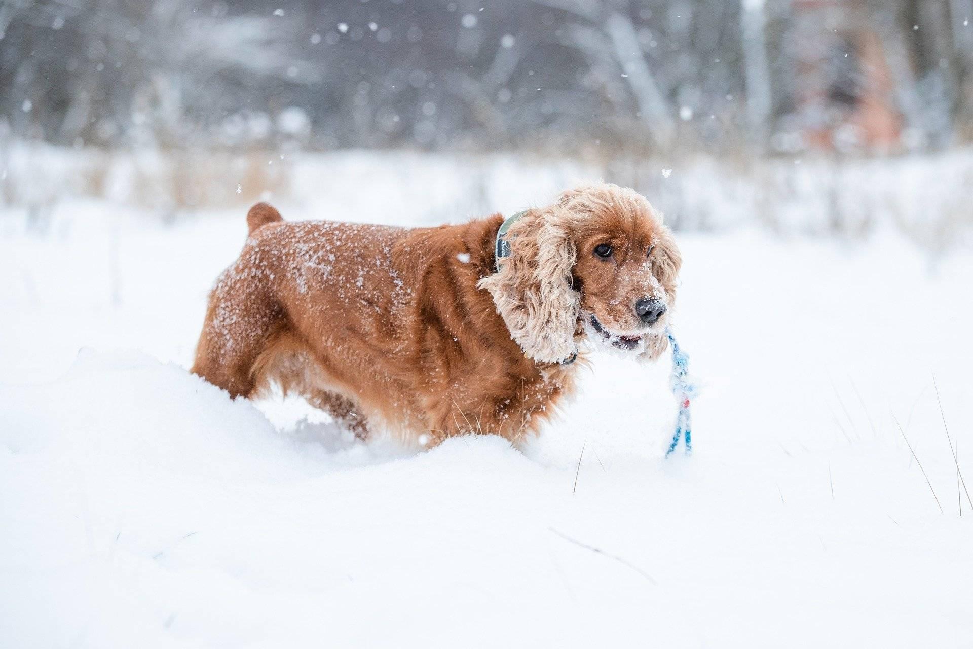 Кировскую область накроет мощным снегопадом и аномальным теплом