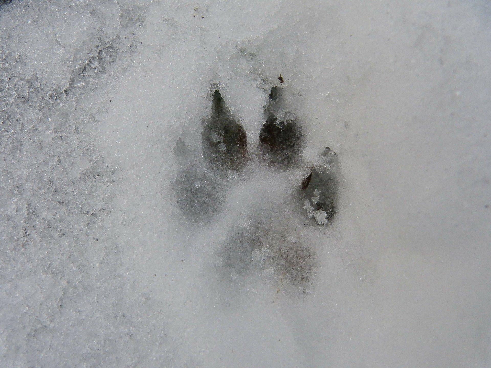 В Кировской области неизвестные расстреляли четырёх собак