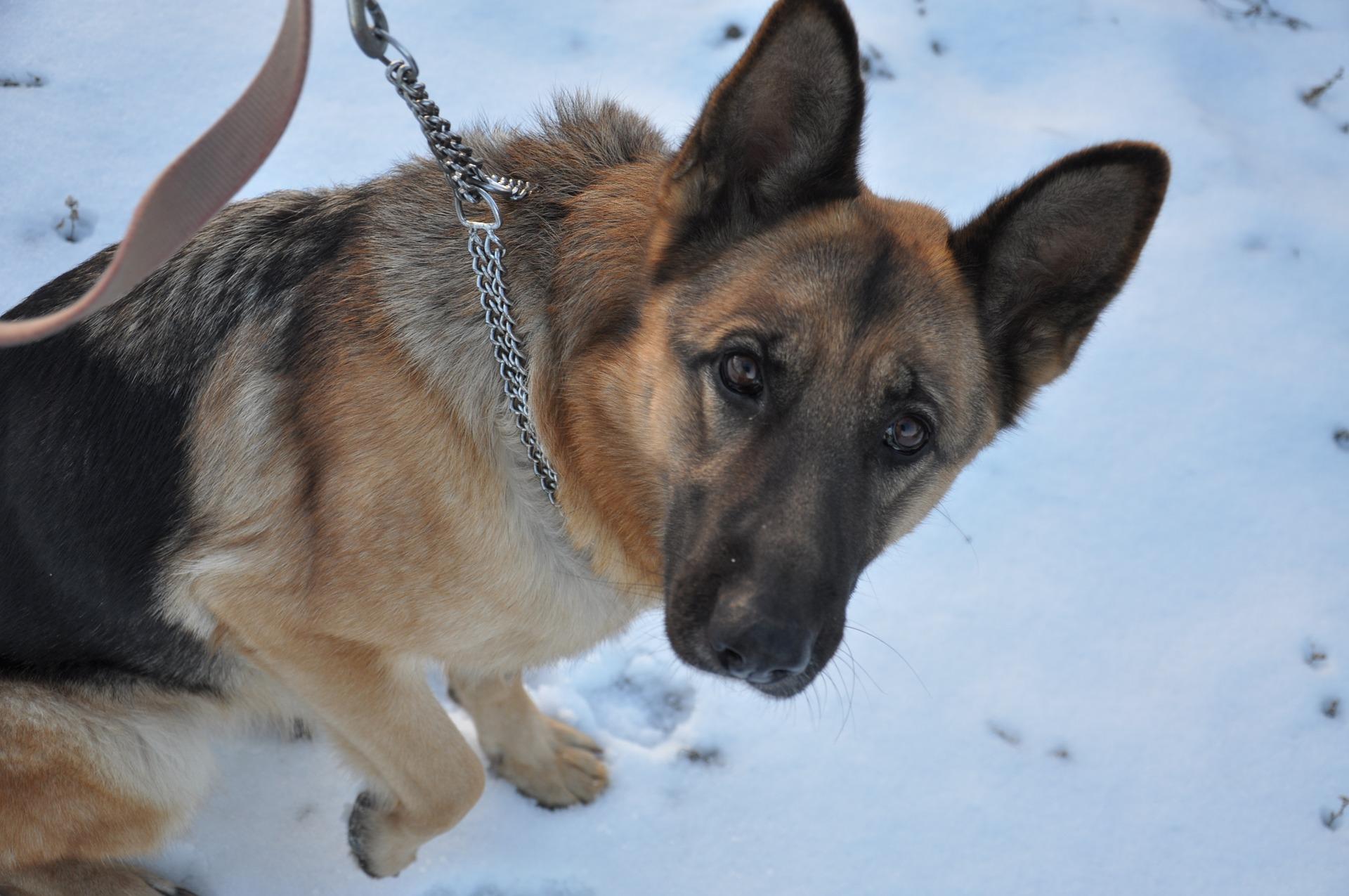 В Котельниче собака разыскала пропавшего 8-летнего ребенка