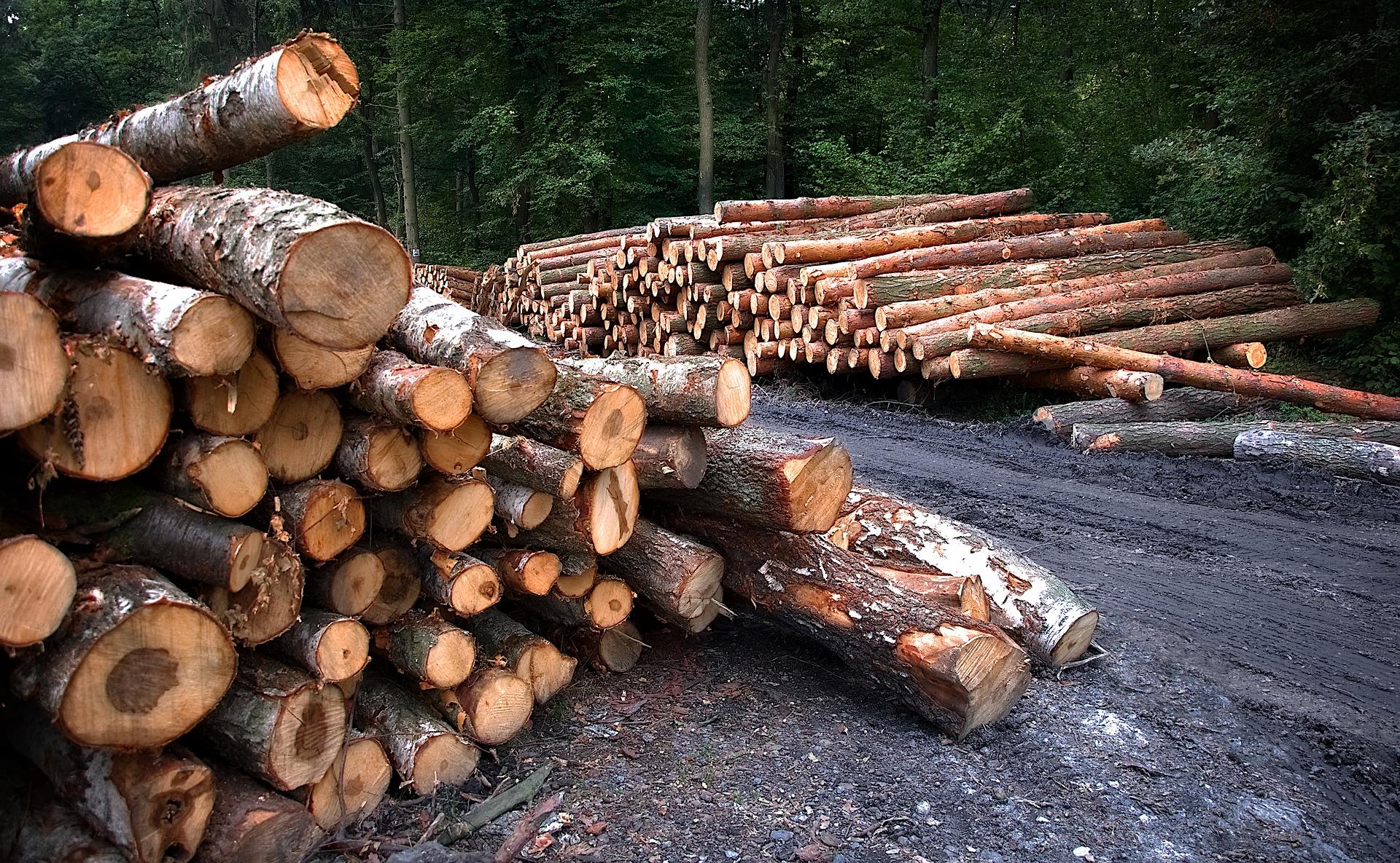В Кировской области на делянке рабочего насмерть придавило деревом