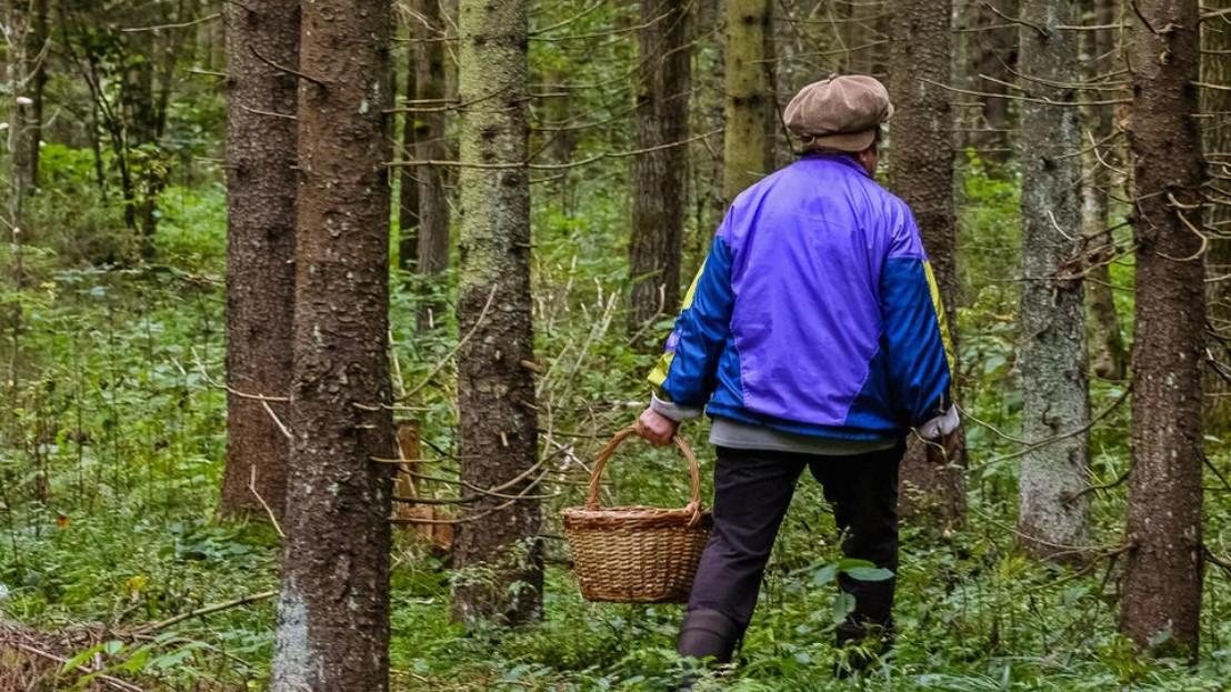 В Кирове спасатели вывели из леса пожилую женщину