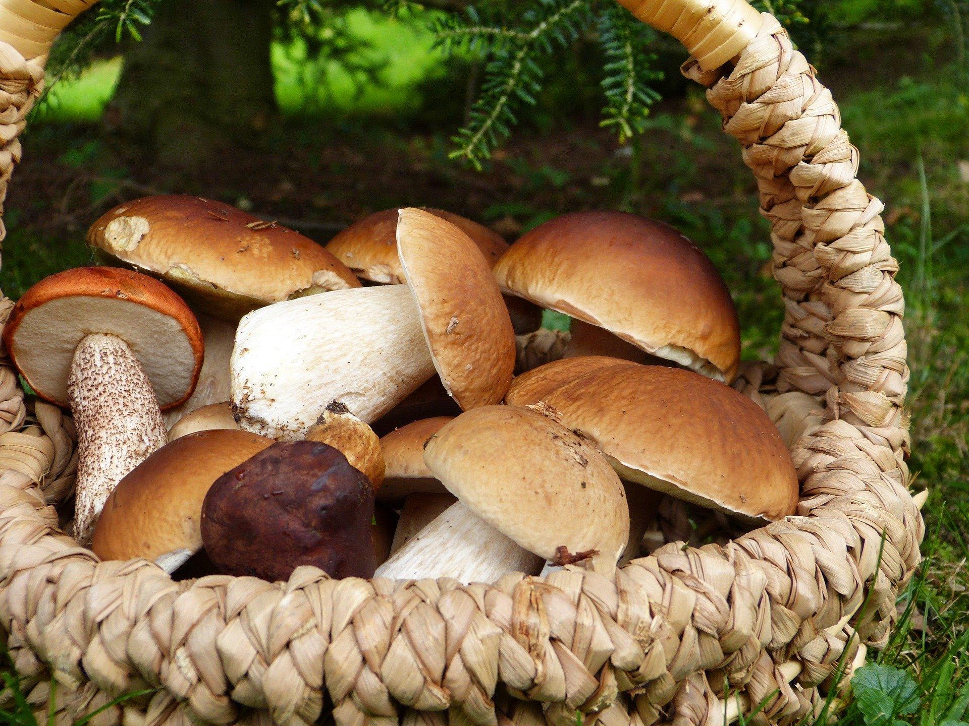 В Кировской области спасли заблудившихся в лесу грибников